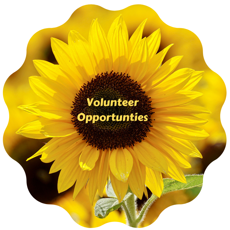 2019 07 Volunteer Opportunties 1